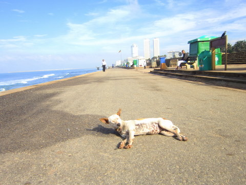 A street dog sunning by the water