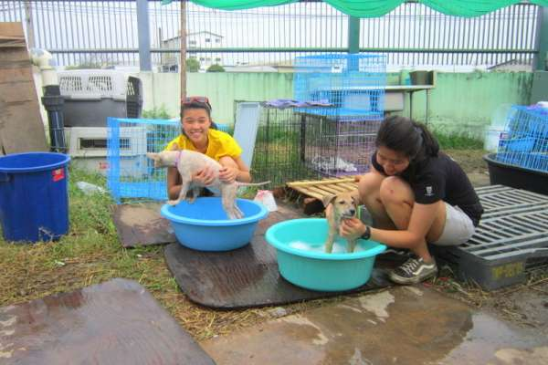 Veterinary students bathing puppies