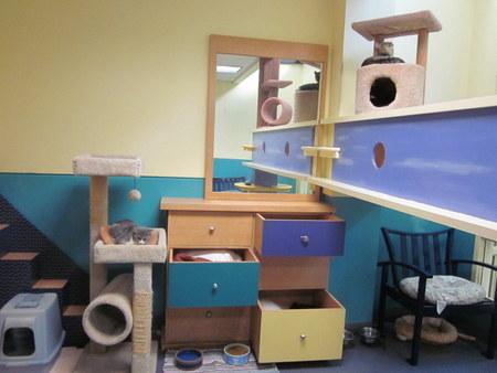 Super duper cool comunal cat housing at the Richmond SPCA.
