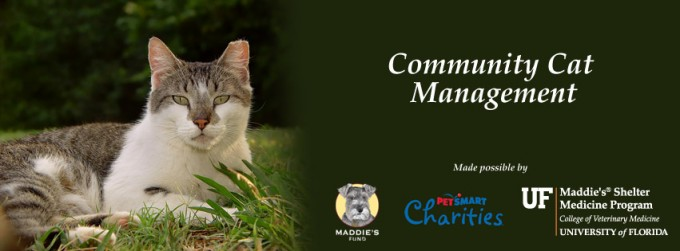 community cat managment