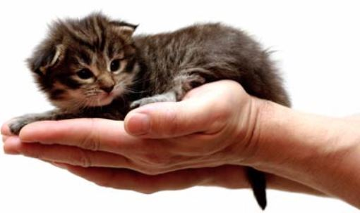 Kitten and a Helping Hand