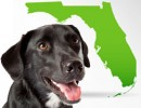 Florida Shelter Animal Census