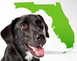 Florida Shelter Animal Census