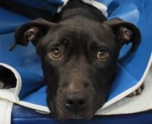 forensics dog photo