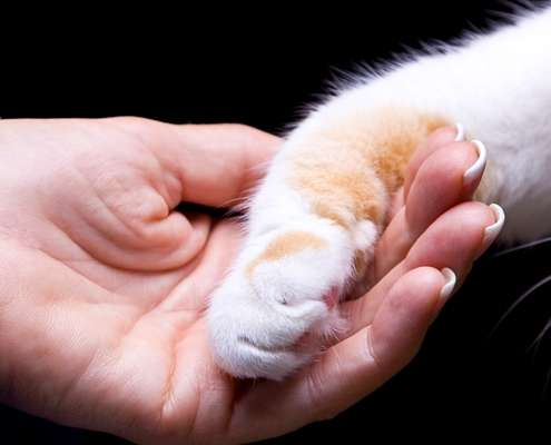 hand holding cat paw