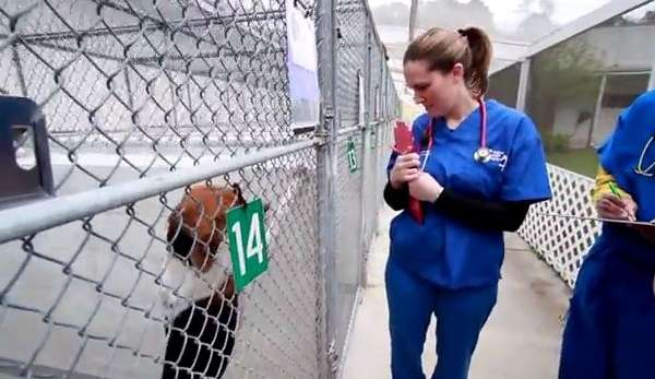 veterinarian doing rounds at shelter