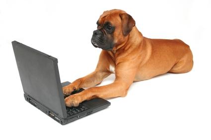 dog-at-computer