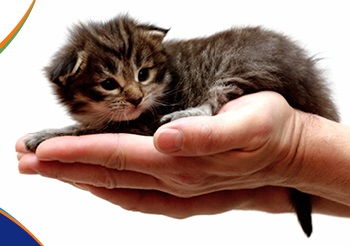 tiny kitten in the palm of a hand