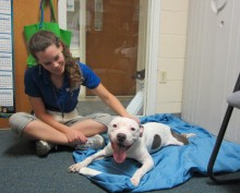 Shelter enrichment for dogs and cats