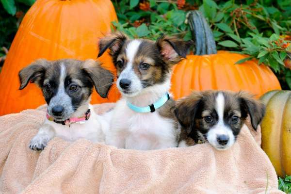 Puppies who survived distemper.