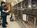 Shelter Vet Making Rounds