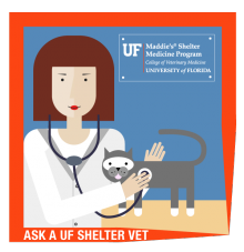 ask-a-shelter-vet-art-600