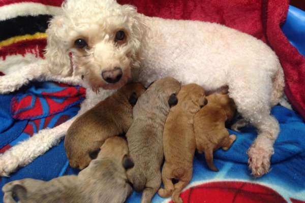 momma dog and her puppies