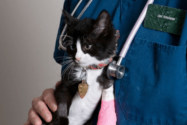 black and white cat held by person in scrubs