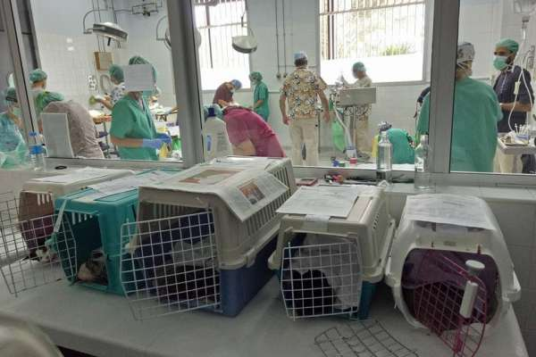 sedated cats in carriers