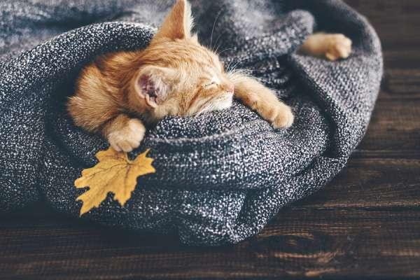 Cute little ginger kitten is sleeping in soft blanket on wooden
