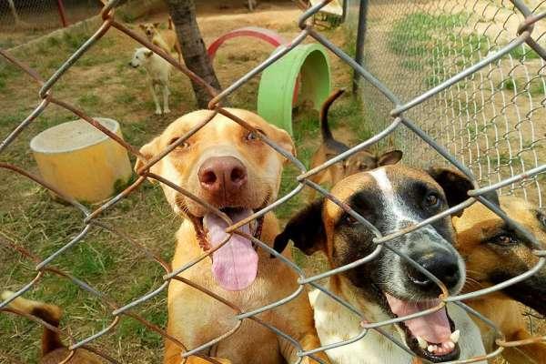 happy dogs in outdoor enclosure