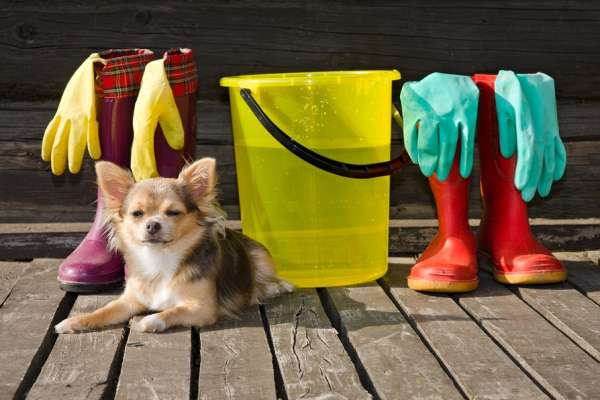 Small dog lying at sunny veranda near items for cleaning and rub