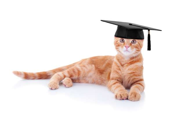 Graduate ginger pet cat in a costume