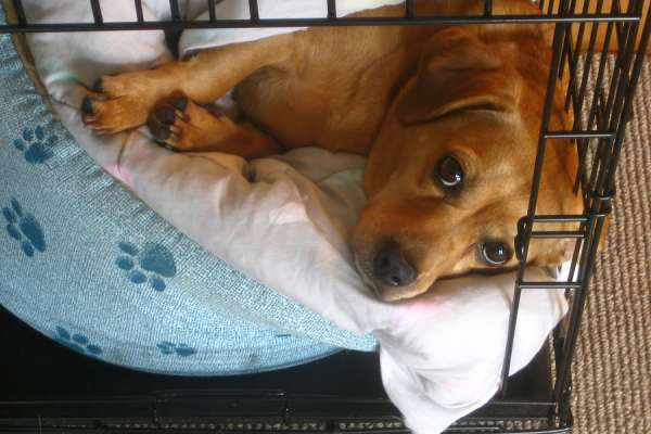 Pictures of a dog in a travel crate