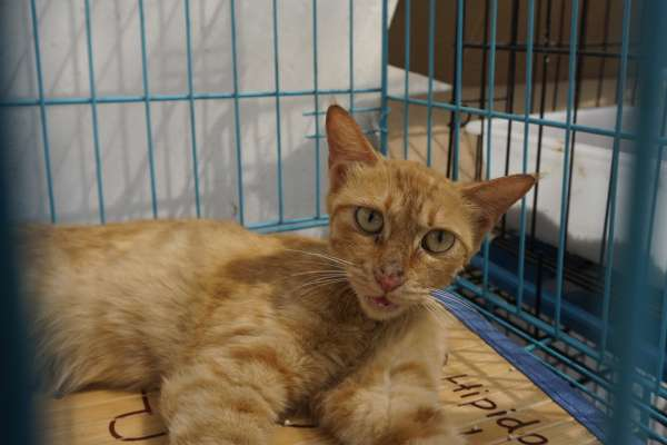 yellow cat in blue crate