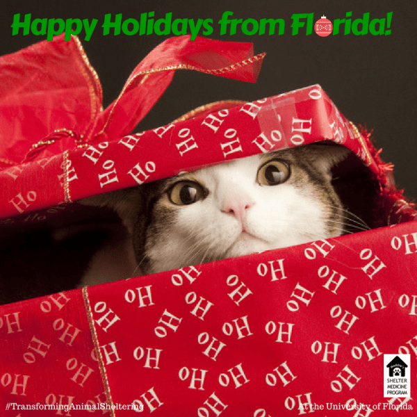 Christmas Holidays 2020 Ufl Warm holiday wishes from the Maddie's Shelter Medicine Program at