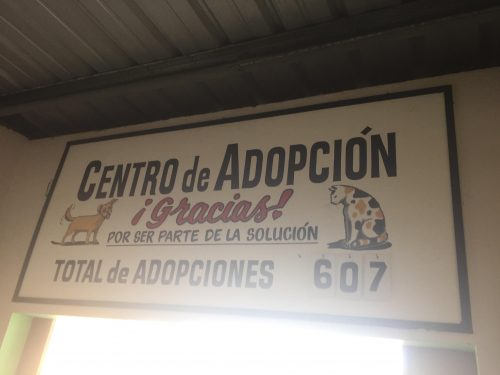 Puerto Rico - Villa Michelle adoption sign