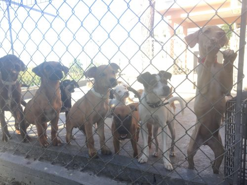 Puerto Rico - shelter dogs