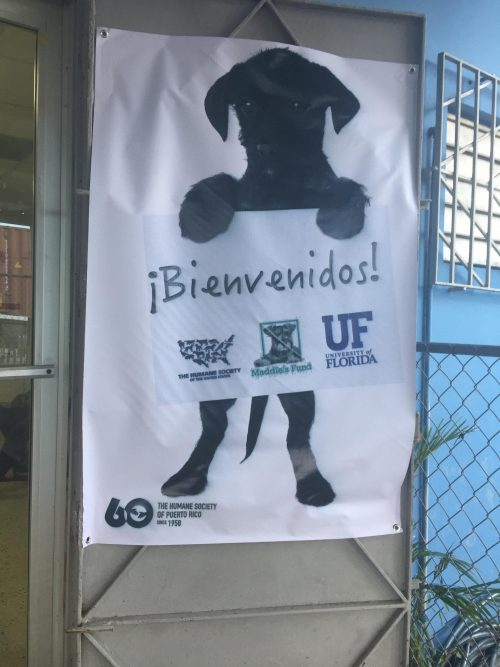 Puerto Rico - welcome to Humane Society Puerto Rico