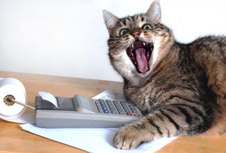 cat, calculator