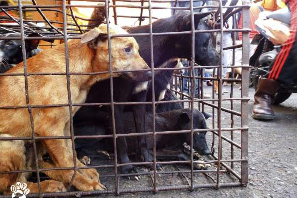 Indonesia dog meat market