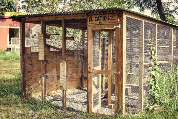 Catio at SASFA