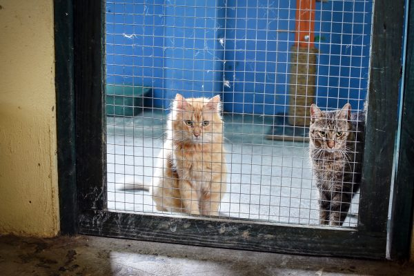 Cats at SASFA