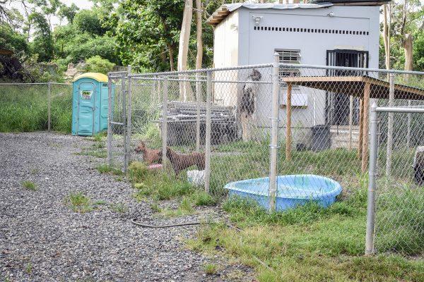 Dog housing at SASFA
