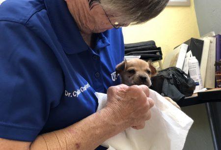 Dr. Cynda Crawford and puppy