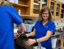 Dr. Julie Levy and a vet student handle a cat in her carrier to reduce stress for the cat.
