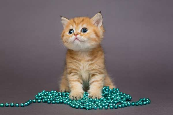 Kitten with beads