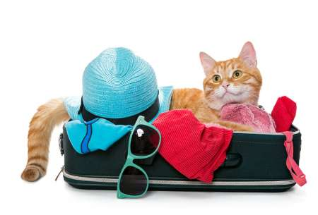 ginger cat lying in a suitcase with sunglasses and sunhat