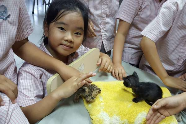 Children with kittens at workship in Da Nang