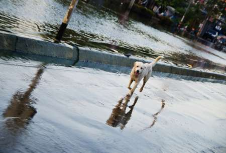 A dog on a flooded road