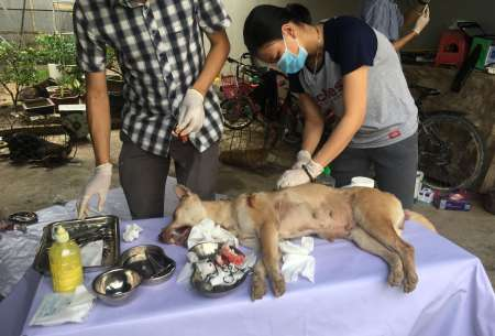 Caring for dogs recovered from a meat trade theft ring