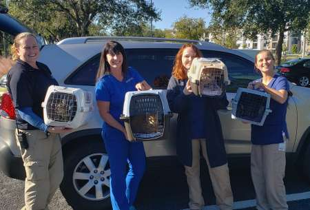 Collier Domestic Animal Services – Collier County