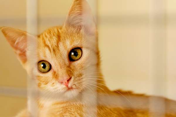 Ginger cat in crate looking at camera
