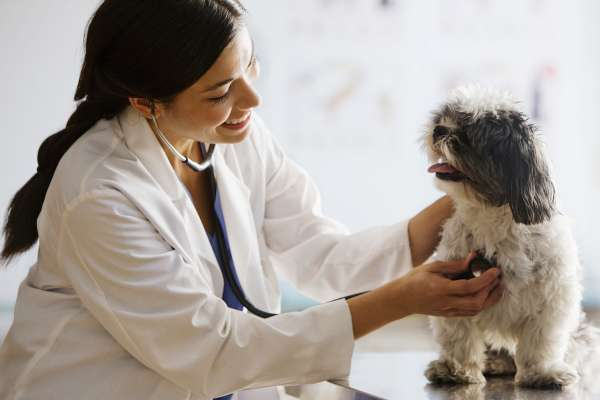 Veterinarian with stethoscope on dog