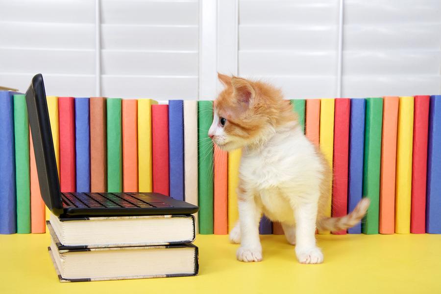 kitten computer