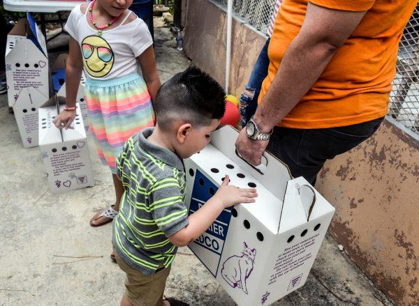 Puerto Rico - Villa Michelle adoptathon, day 2