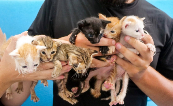 Kittens rescued from the Vietnamese meat trade
