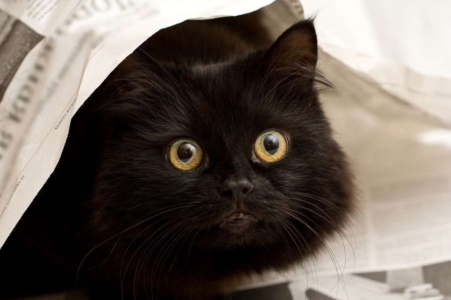 Black cat hiding under newspaper