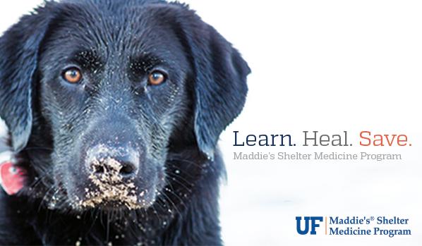 Sign up for Shelter Medicine news