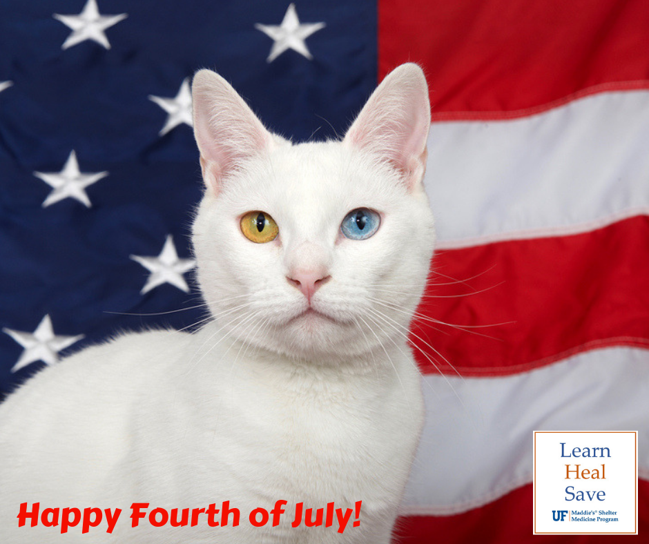 Fourth of July greeting